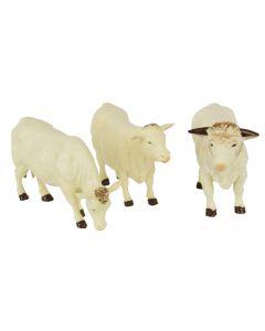 Zestaw bydła Charolais